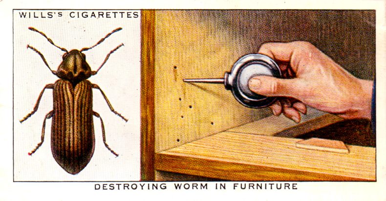 Destroying worm from furniture