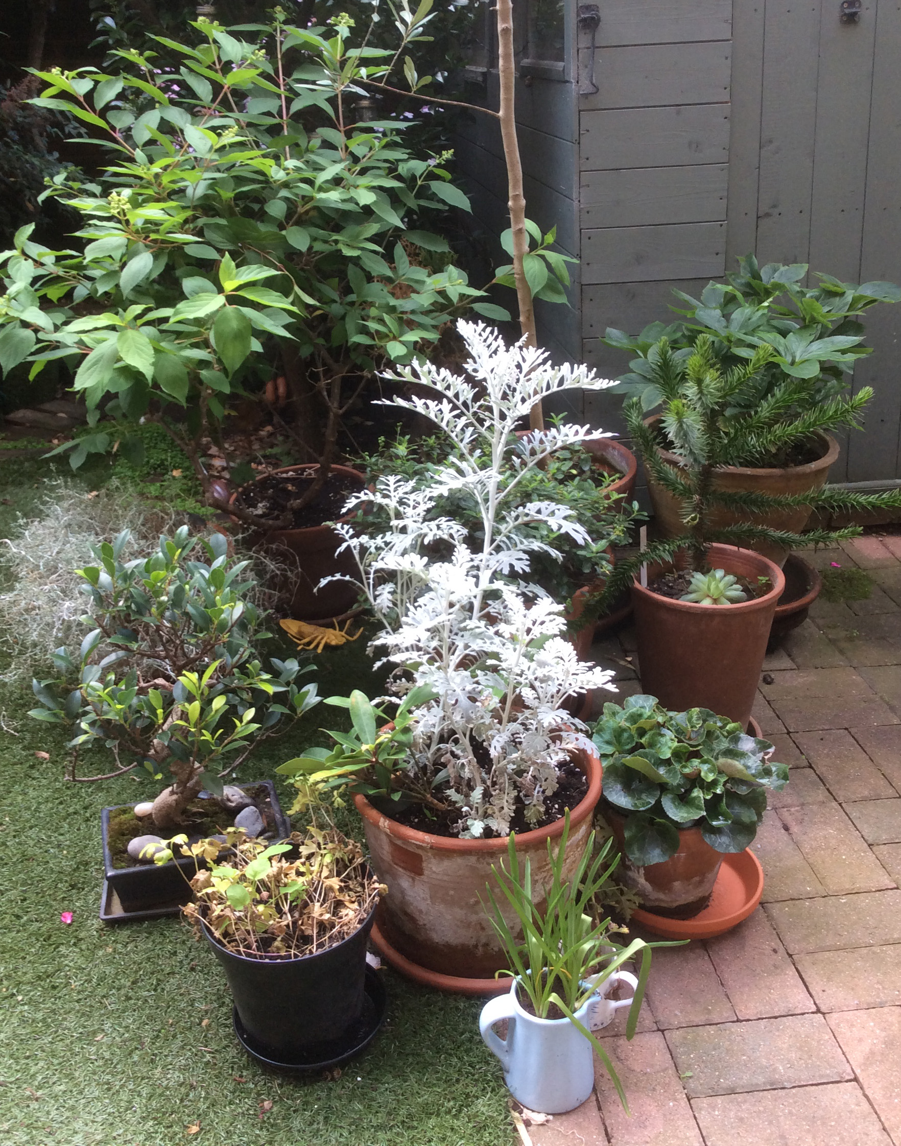 Gardening Containers for Small Spaces